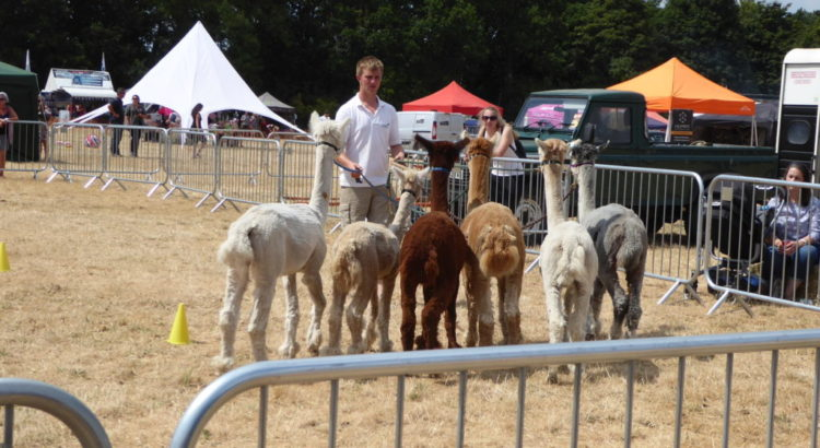 Elveden Country Show and Festival of Dogs July 2018 - Iceni Minors